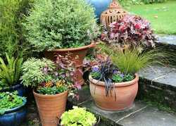 Pots & Planters for Autumn