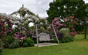 Swing Seat Amongst Flowers at Peter Beales Roses