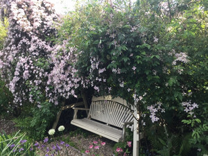 Clematis creating natural shade