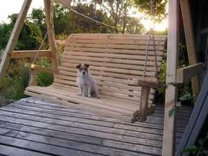 Dog on Wooden Swing Seat