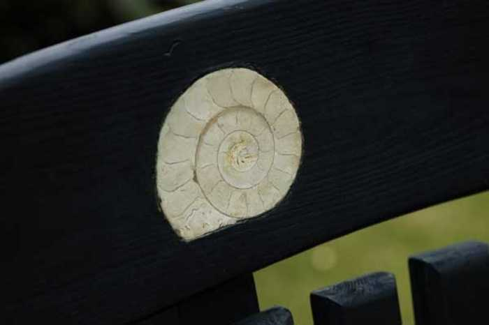 Ammonite in a painted Pine swing Seat