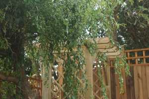 Small Garden Arbour with Seats under willow